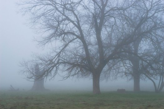 Tree in the fog on a foggy morning