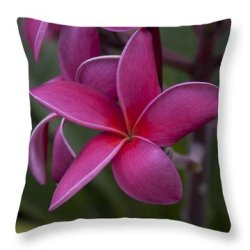great photo gifts - pillows