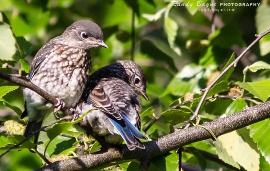 Bluebird Teaches a Lesson on Life Outside the Box