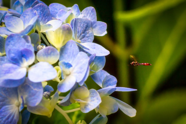 Hover Fly, you are cleared for landing.