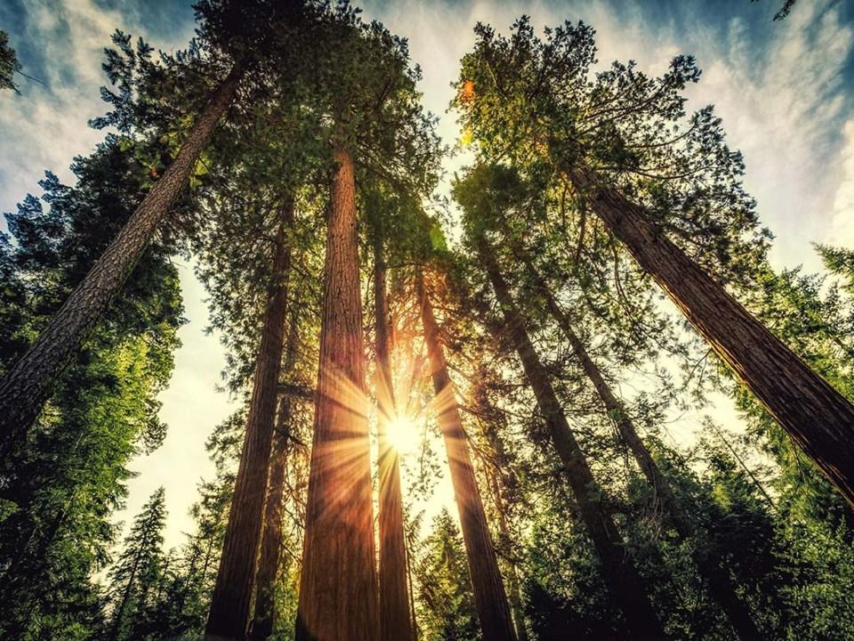 Sunrise on the Sequoias