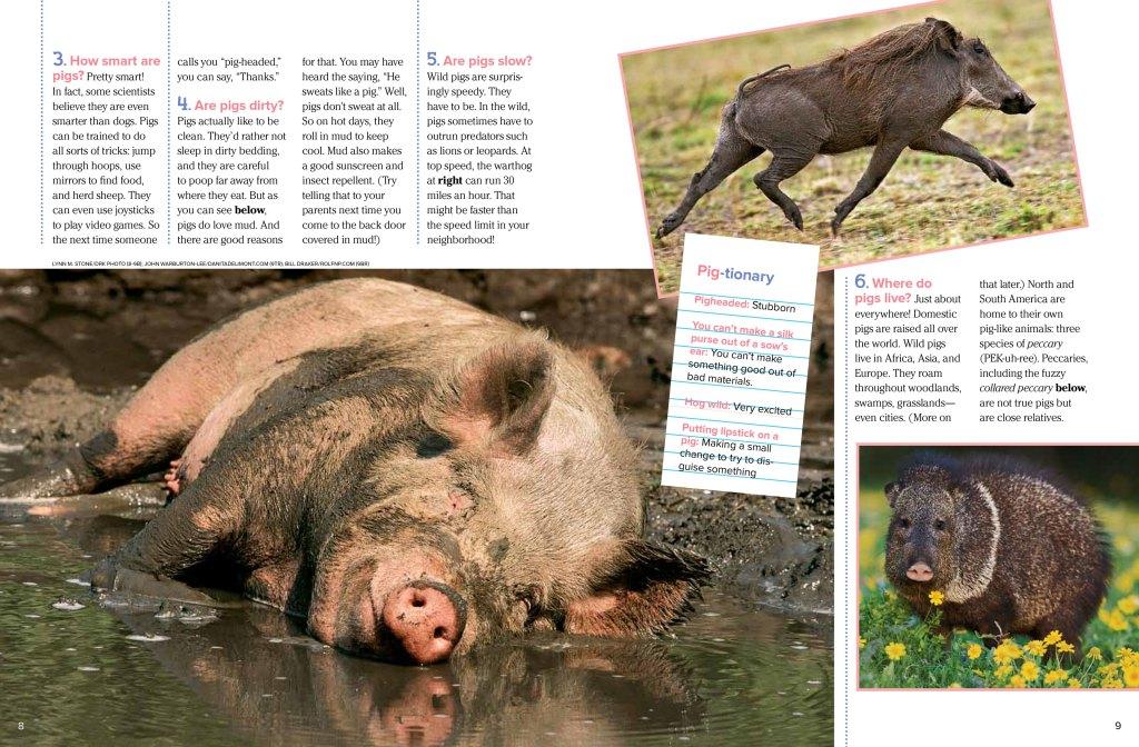 pigs-Nov2012-page2