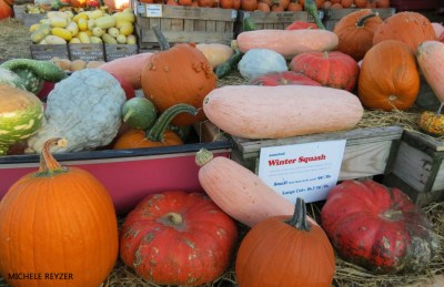 Pumpkins and squash by Michele Reyzer