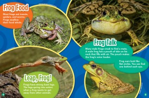 Frog Food