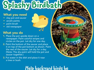 Splashy Birdbath