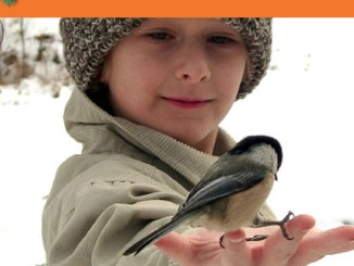 Chickadee Activity