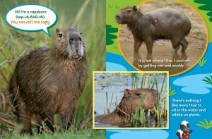 Mystery Animal Capybara Ranger Rick Jr March 2016 2