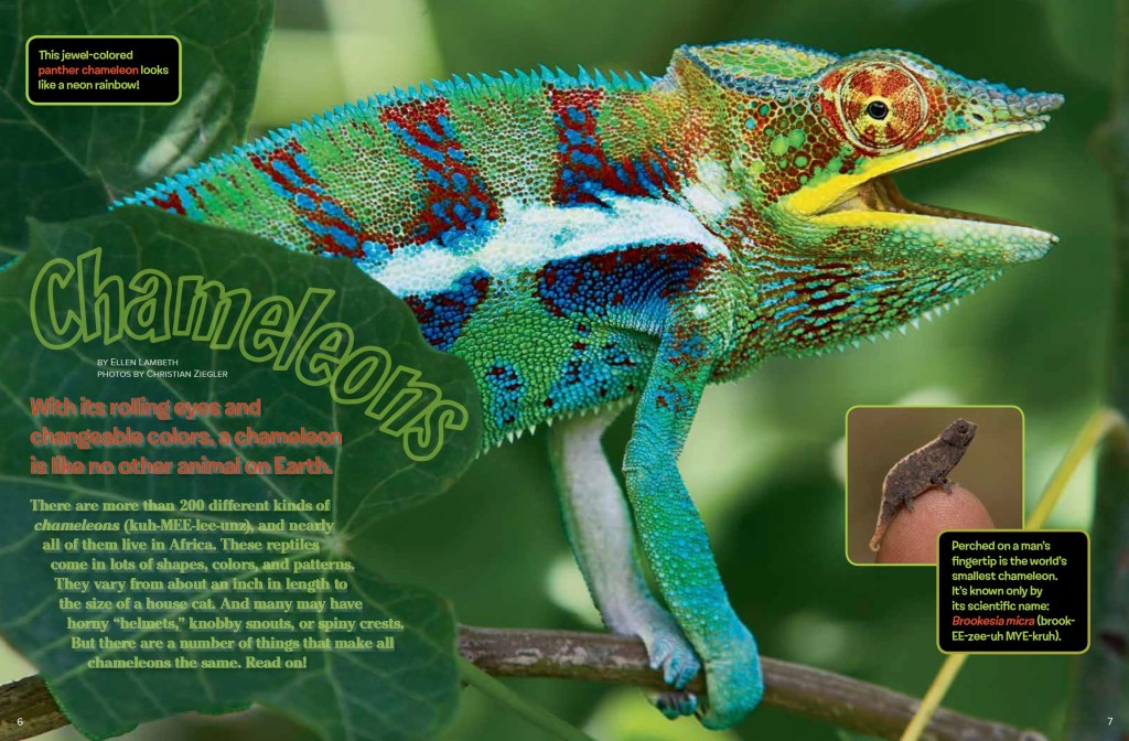 Chameleons Ranger Rick December January 2017 1