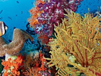 Coral Reef Ranger Rick November 2017