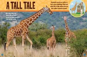 Giraffe Ranger Rick Jr April 2017 1