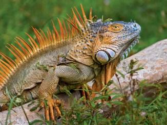 Reptile World Ranger Rick Jr September 2016