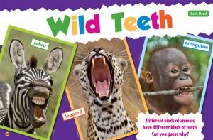 Wild Teeth Ranger Rick Jr May 2017 1