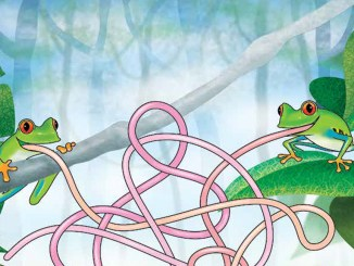 Treefrog maze