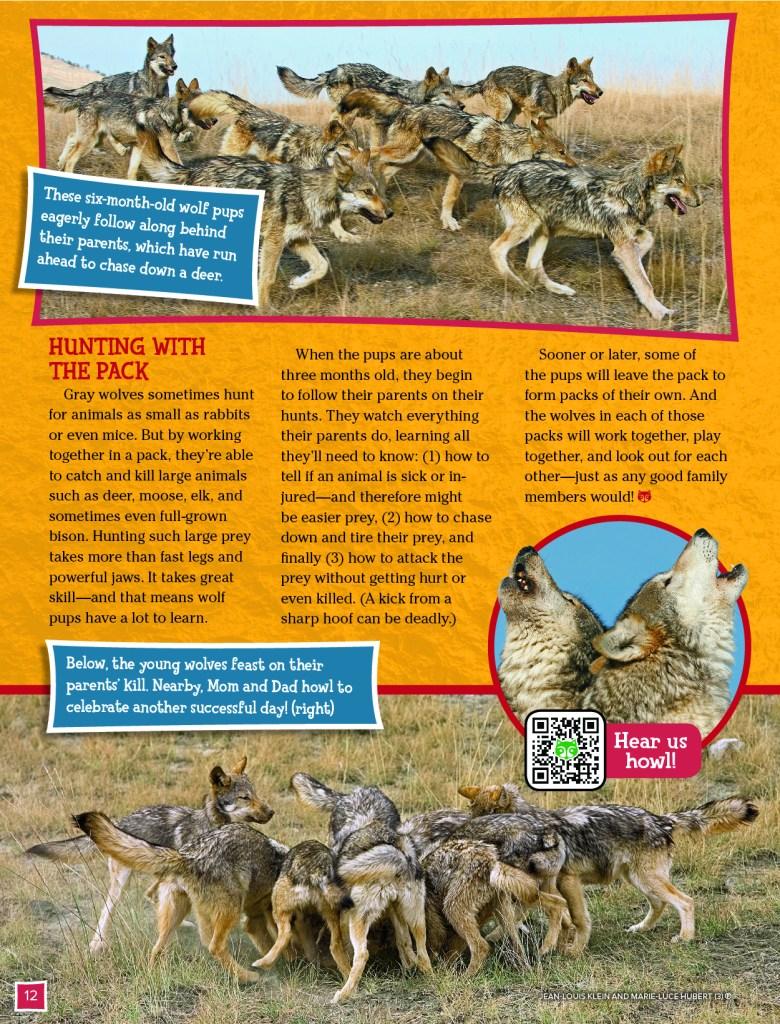 Grey Wolves Ranger Rick November 2017 4