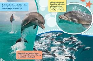 Dolphins Ranger Rick Jr June July 2016 2