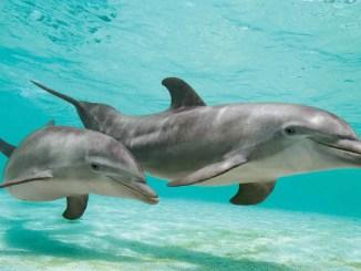 Dolphins Ranger Rick Jr June July 2016