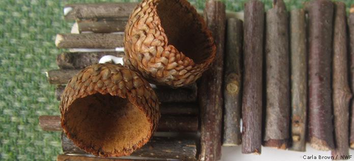 glued acorns