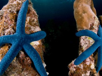 Ranger Rick Sea Stars August 2014