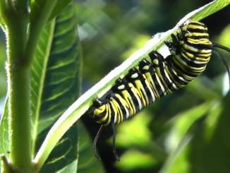 Caterpillar Video May 2018 RR Jr