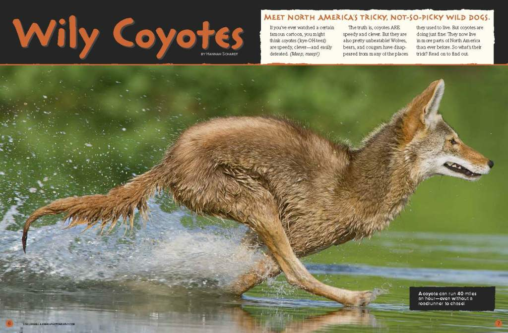 Ranger Rick Wily Coyotes April 2015 1