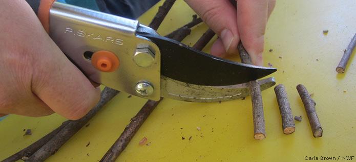 cutting twigs