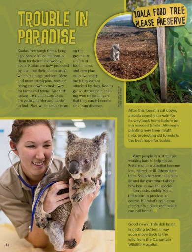 Ranger Rick Koala Kid February 2014 4
