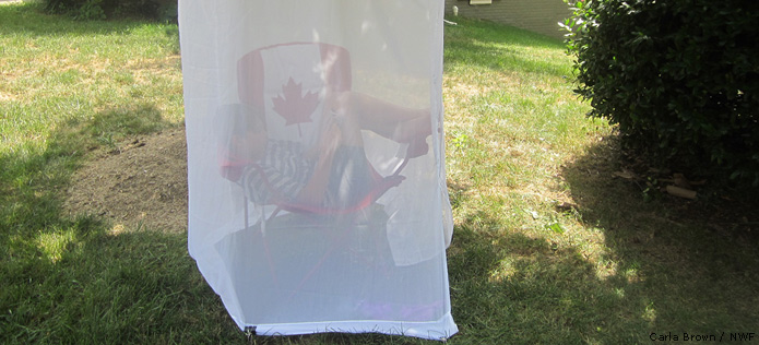 girl in mosquite net tent