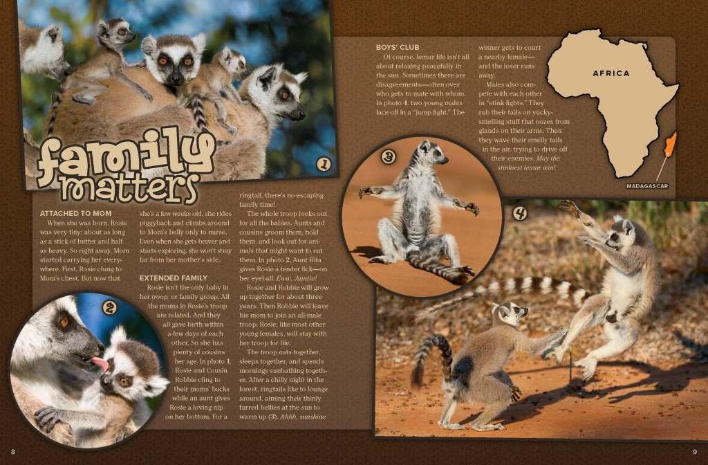 Ranger Rick Ring-Tailed Lemur May 2014 2
