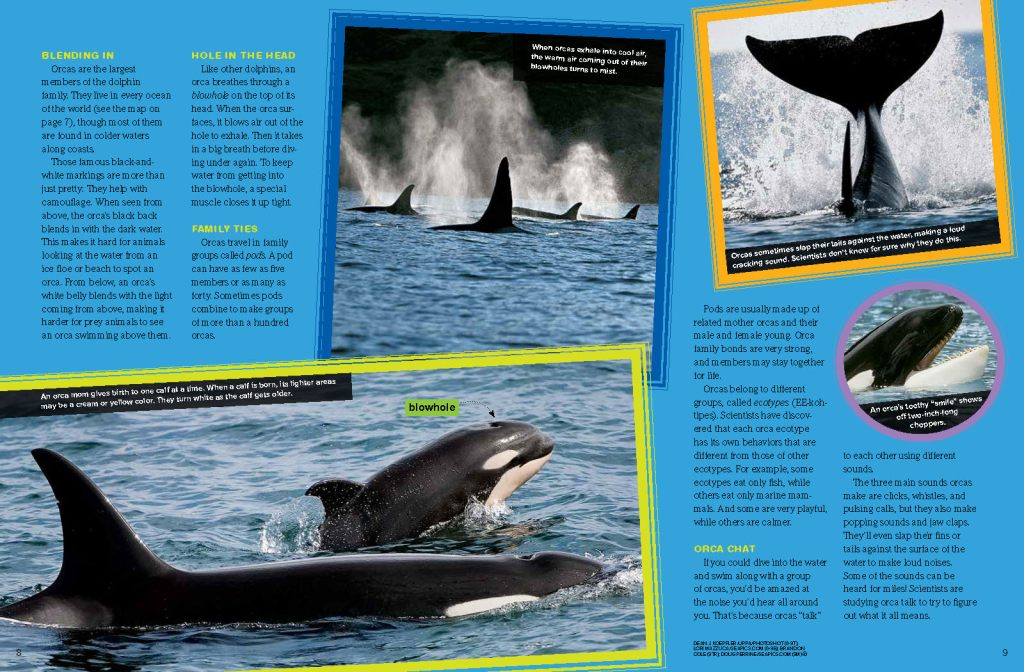 Ranger Rick Orcas March 2015 2