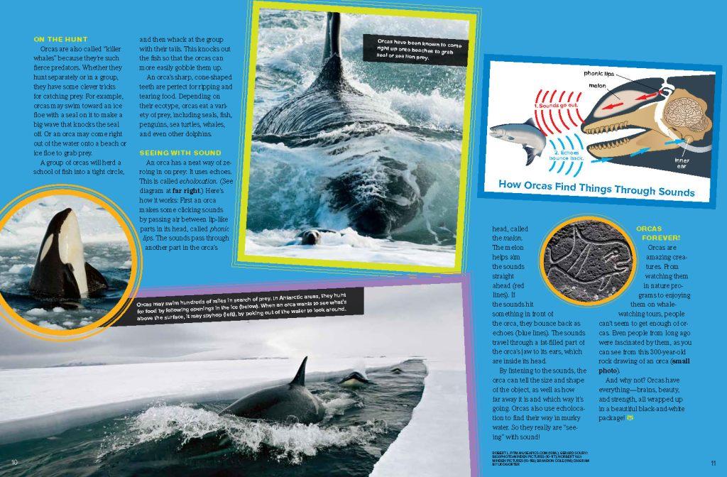 Ranger Rick Orcas March 2015 3