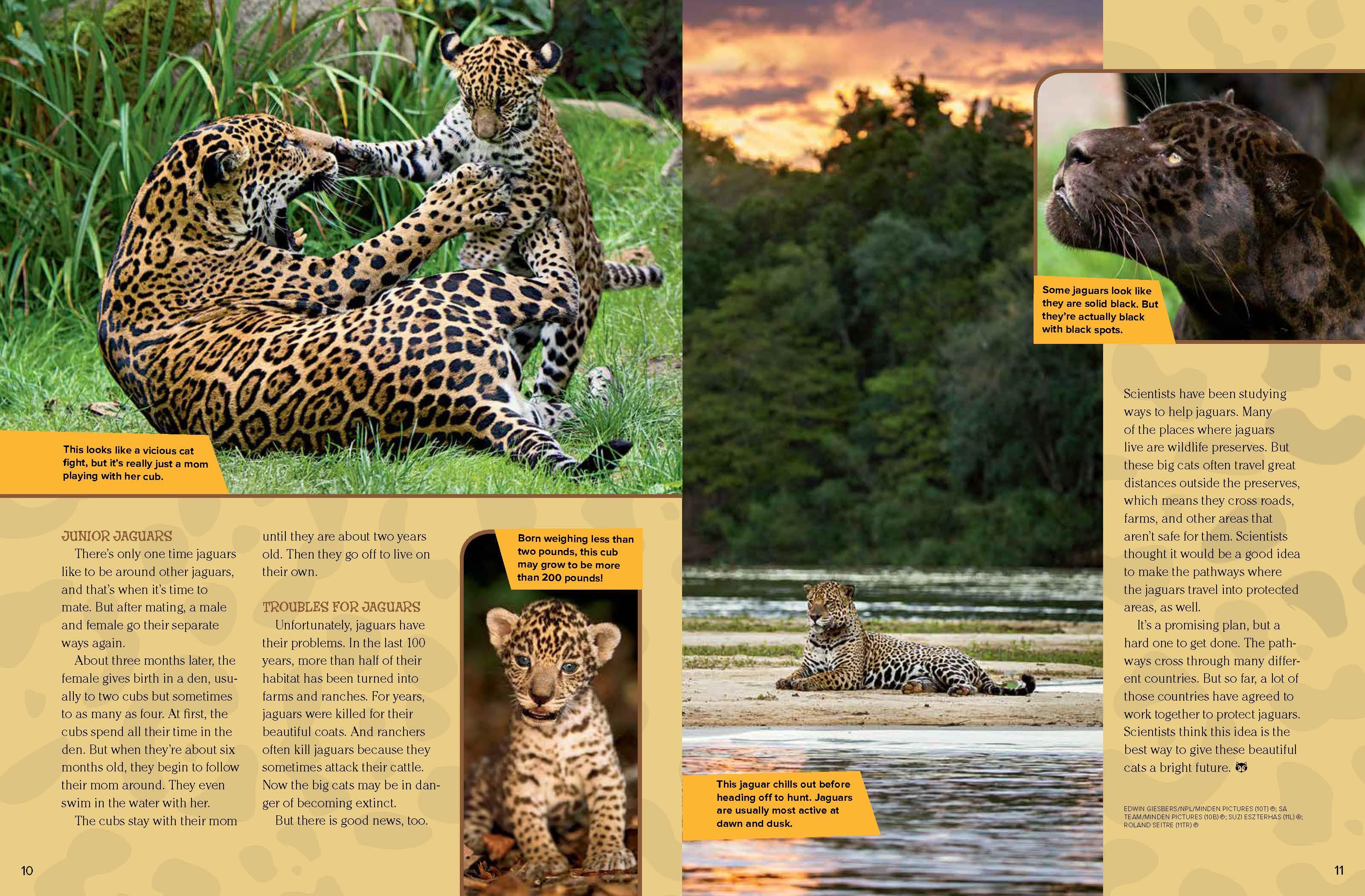 Jaguars - NWF | Ranger Rick