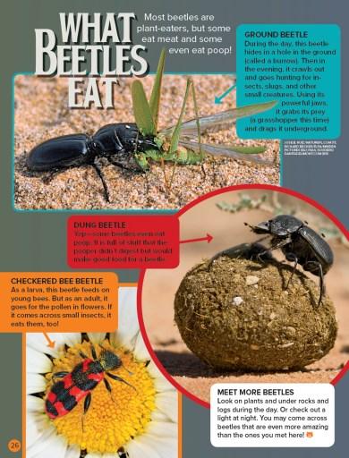 Ranger Rick Beetles September 2016 4