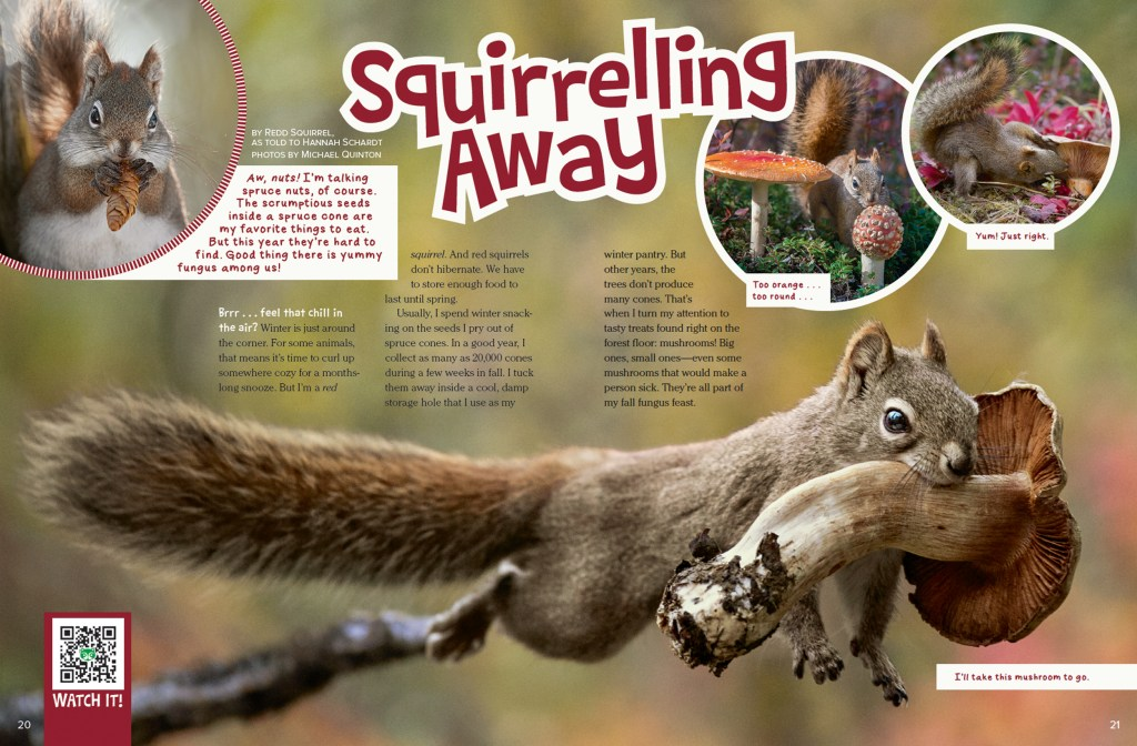 Ranger Rick Squirrelling Away October 2016 1