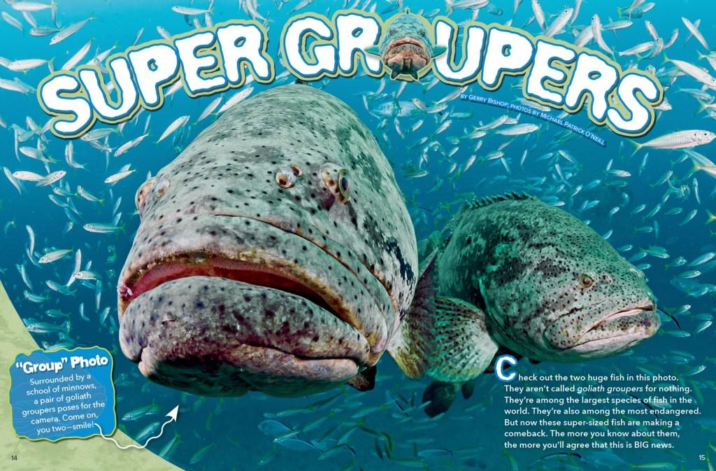 Ranger Rick Super Grouper November 2015 1