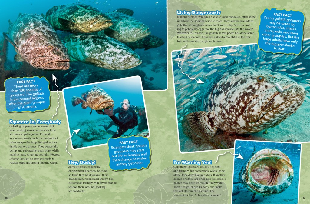 Ranger Rick Super Grouper November 2015 2