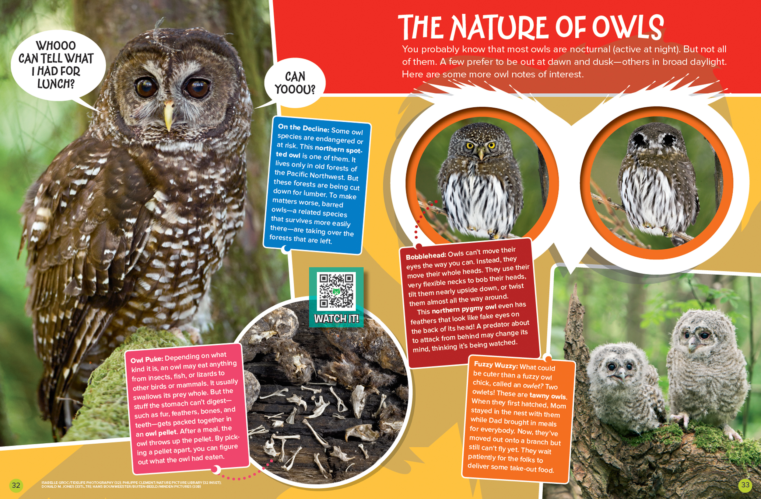 Who Knows Owls? - NWF | Ranger Rick