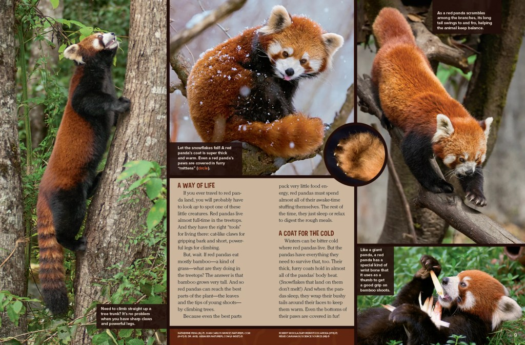 Ranger Rick Red Panda August 2016 2