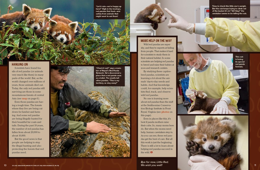 Ranger Rick Red Panda August 2016 3