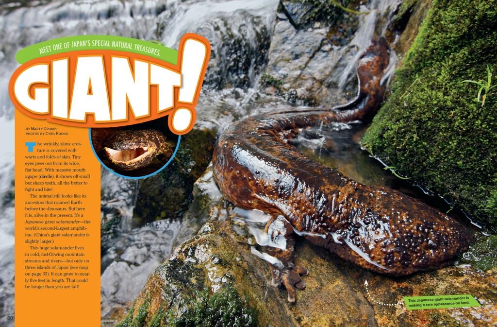 Ranger Rick Giant Salamander March 2015 1