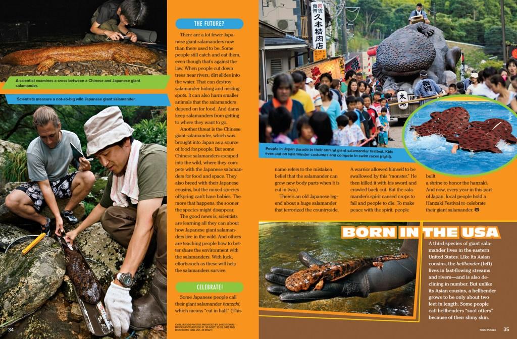 Ranger Rick Giant Salamander March 2015 3