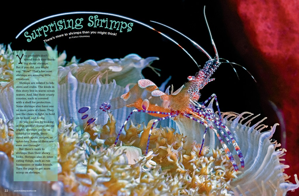Ranger Rick Surprising Shrimps April 2015 1