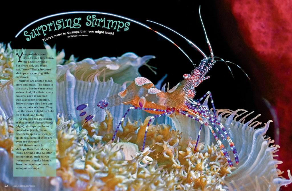 Ranger Rick Surprising Shrimps April 2015 1