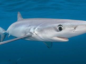 Ranger Rick Jr Sharks September 2014