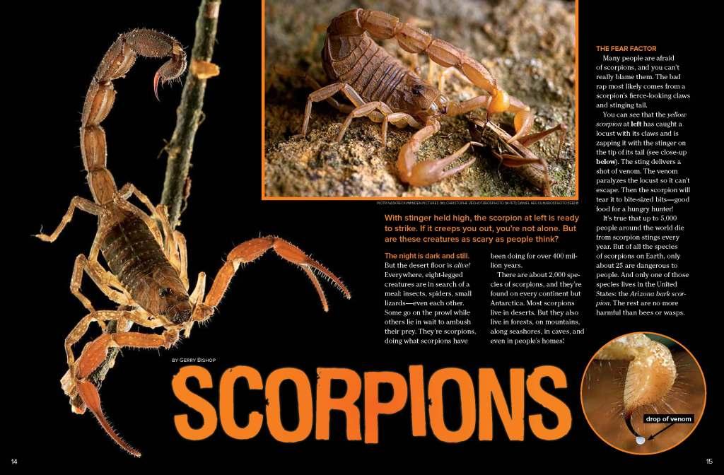 Ranger Rick Scorpions September 2013 1