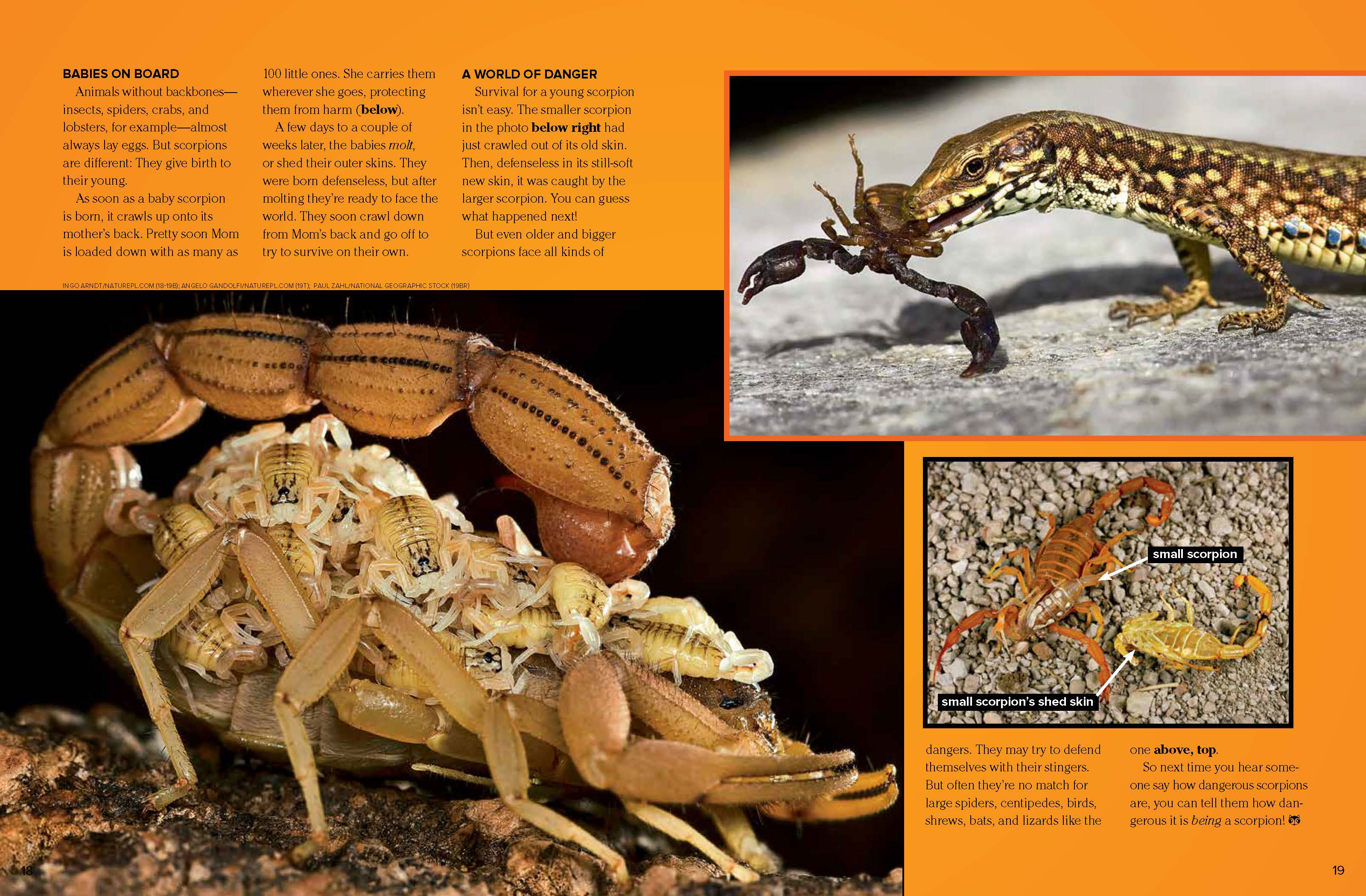 Scorpions - NWF   Ranger Rick