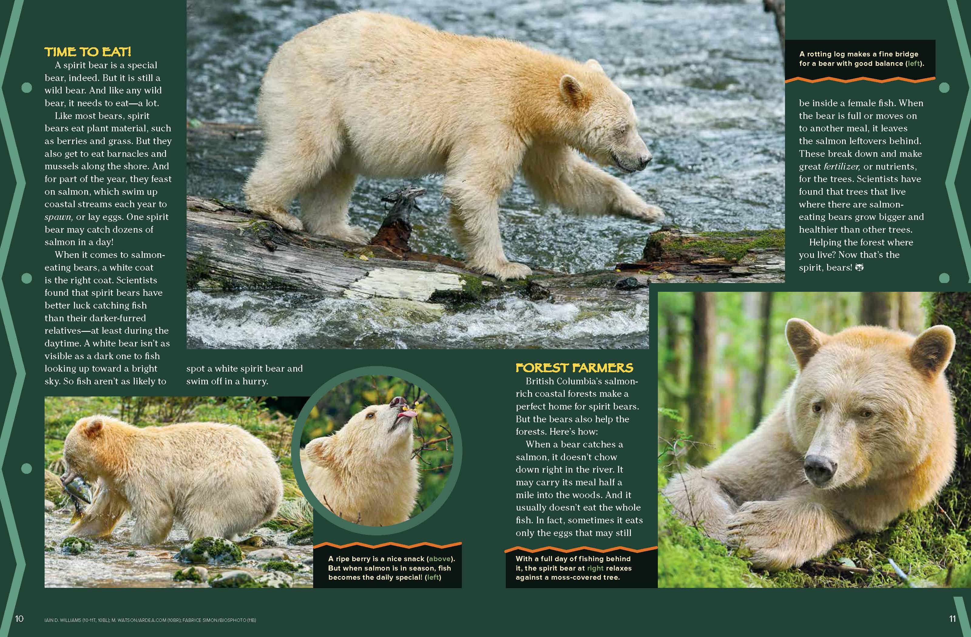Spirit Bears Nwf Ranger Rick