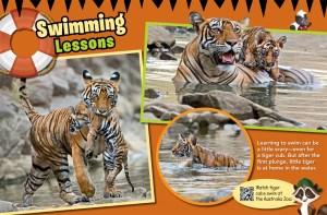 Ranger Rick Jr Tigers August 2015 3