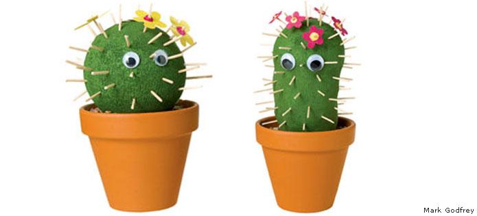 Sock cactus garden