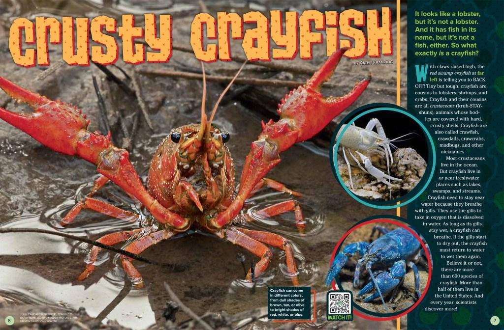 Crusty Crayfish JJ 2018 RR-1
