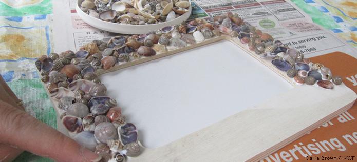 sea shell picture